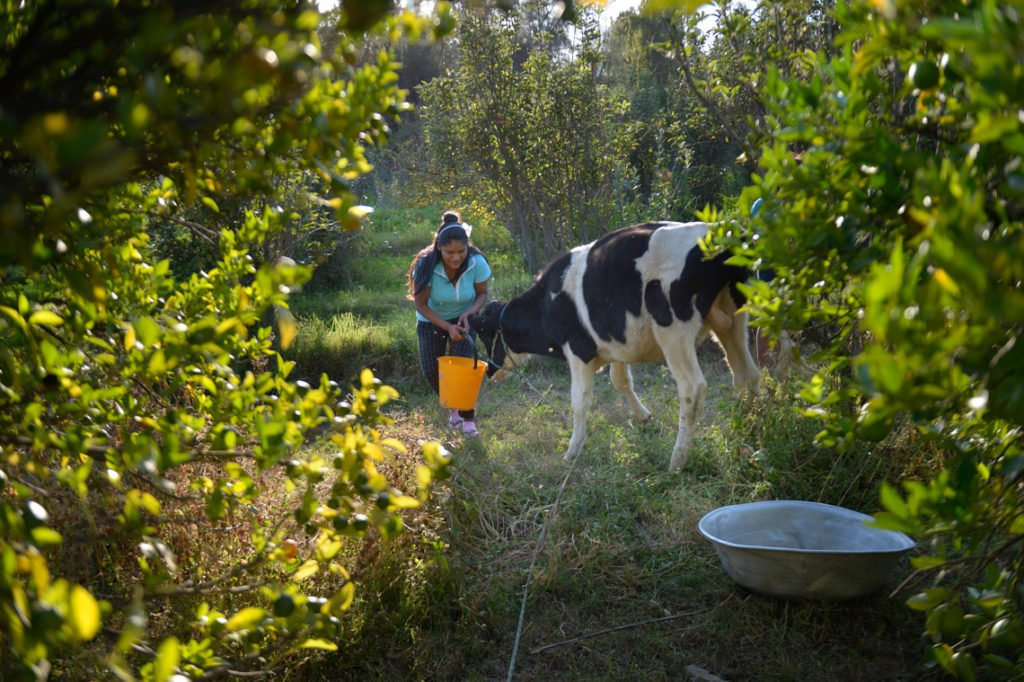 Tierhaltung (Kühe) in der eigenen Landwirtschaft des Kinderheims Comunidad La Providencia, Catro Esquinas, Departamento Cochabamba, Bolivien; Foto: Florian Kopp/SMMP