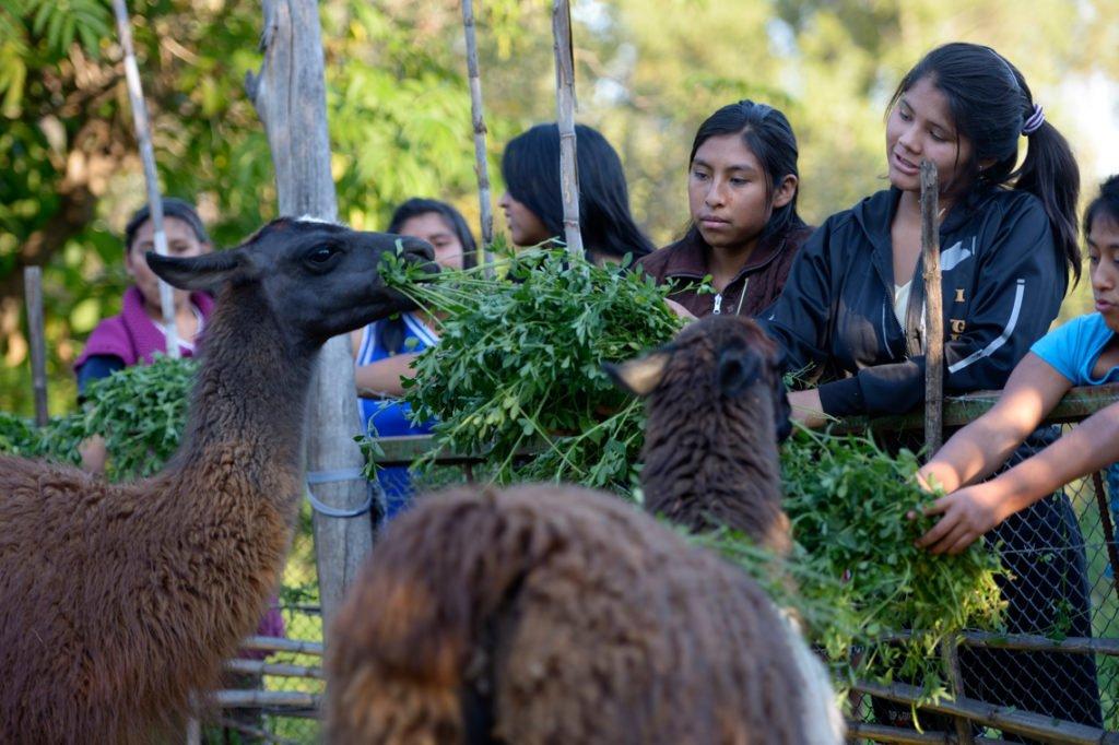 Lamas in der eigenen Landwirtschaft des Kinderheims Comunidad La Providencia, Catro Esquinas, Departamento Cochabamba, Bolivien; Foto: Florian Kopp/SMMP