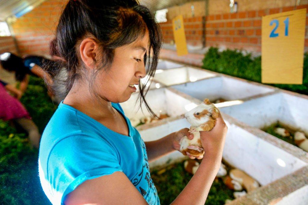 Meerschweinchen (span.: Cuy) sind wichtiger Bestandteil der traditionellen andinen Küche. Ähnlich wie bei uns Hühnchen. Diese hier leben (noch) in der Landwirtschaft des Kinderheims Comunidad La Providencia, Cuatro Esquinas, Departamento Cochabamba, Bolivien. (Foto: Florian Kopp/SMMP)