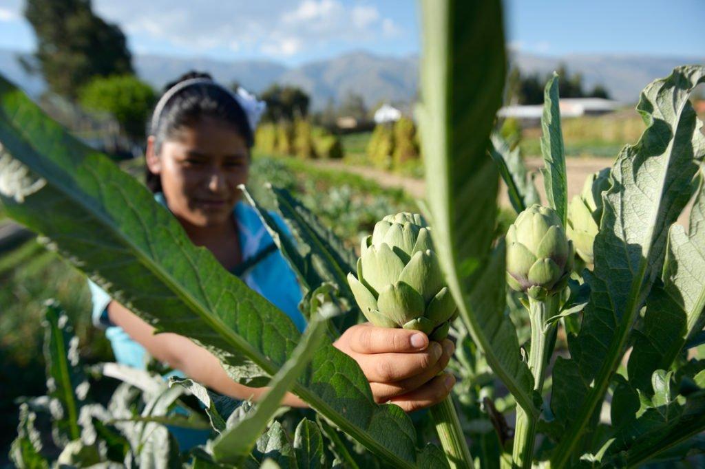 Jugendliche arbeiten in den Gemüsegärten - Kinderheim Comunidad La Providencia, Catro Esquinas, Departamento Cochabamba, Bolivien; Foto: Florian Kopp/SMMP